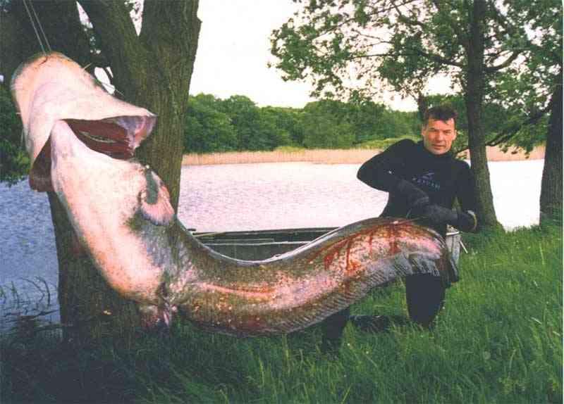 рыбаки поймали 36 рыб первый поймал в 8 раз больше