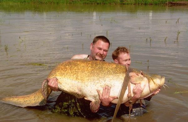 рыбаки поймали 112 кг рыбы