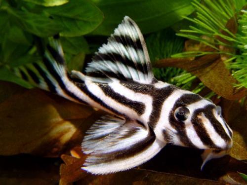 отзывы о прикормке fishhungry