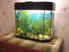 сколько живут аквариумные сомы