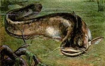 диалоги рыбалке прикормка производитель